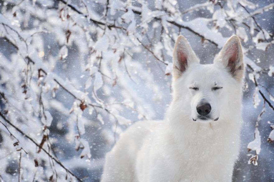 retratos-perros-naturaleza-anne-geier (17)