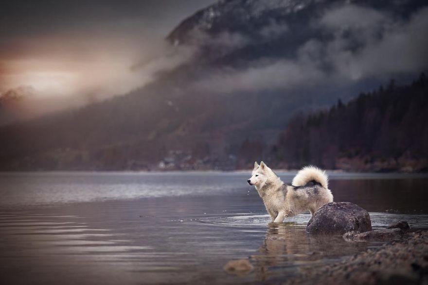 retratos-perros-naturaleza-anne-geier (20)