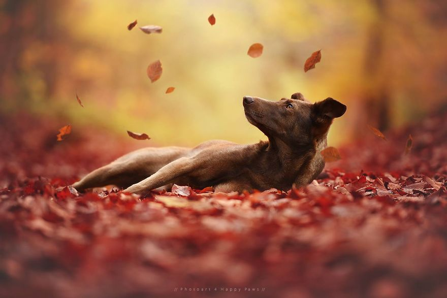 retratos-perros-naturaleza-anne-geier (3)