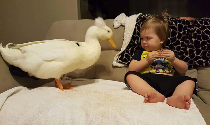 amistad-mascota-pato-beaker-nino-tyler-young (10)