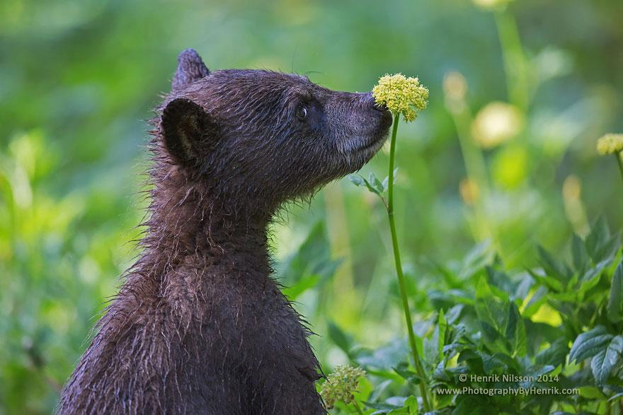 animales-oliendo-flores (6)