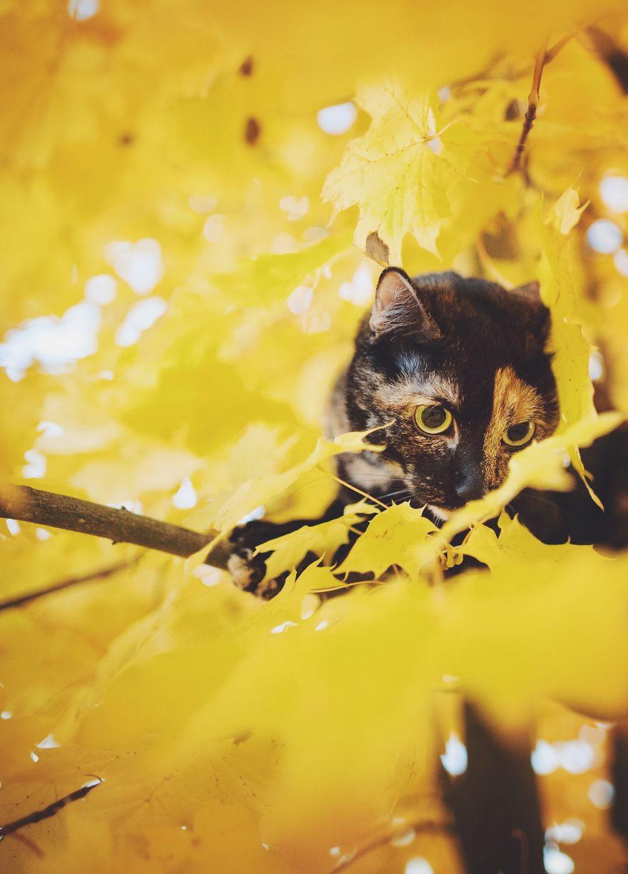 fotos-gato-estaciones (16)