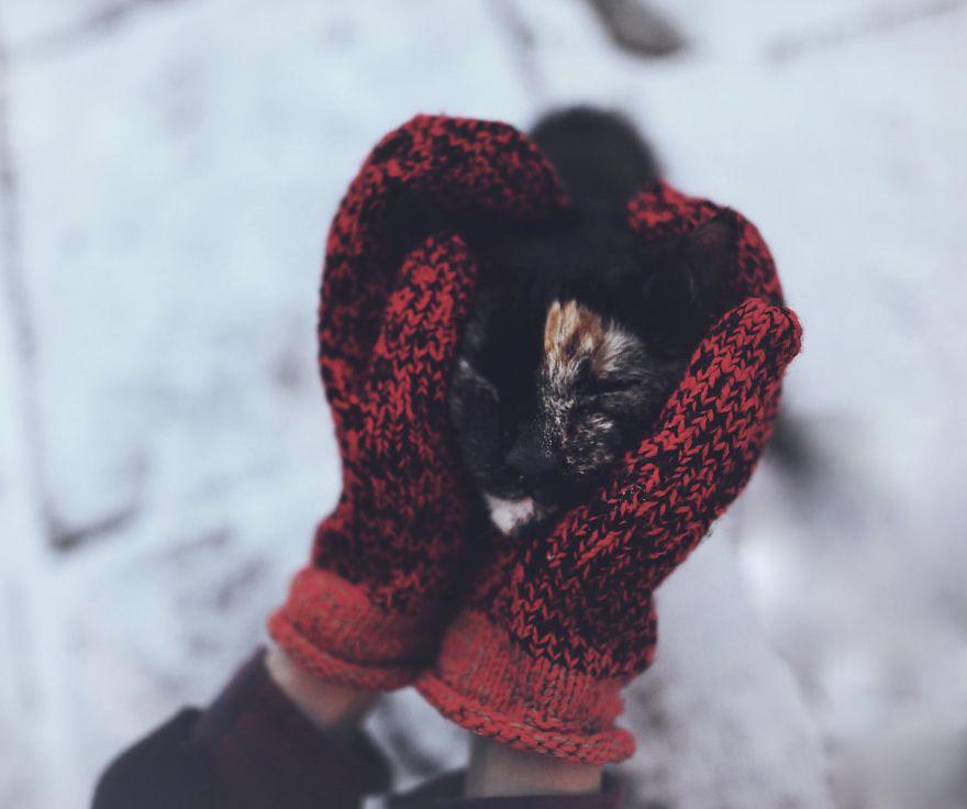 fotos-gato-estaciones (3)