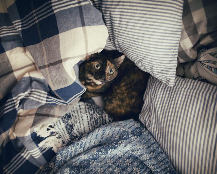 fotos-gato-estaciones (4)