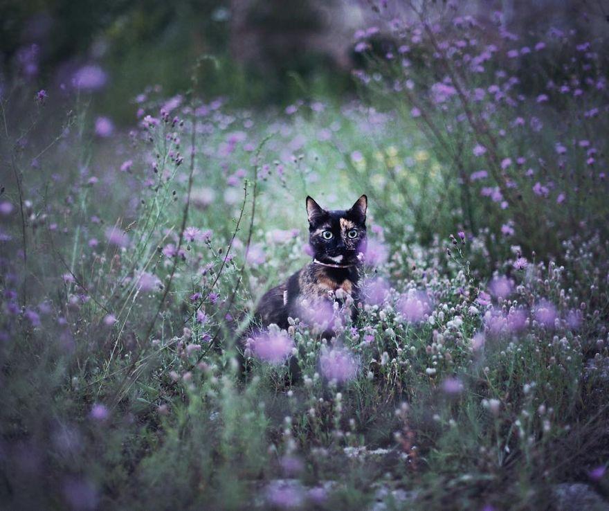 fotos-gato-estaciones (7)