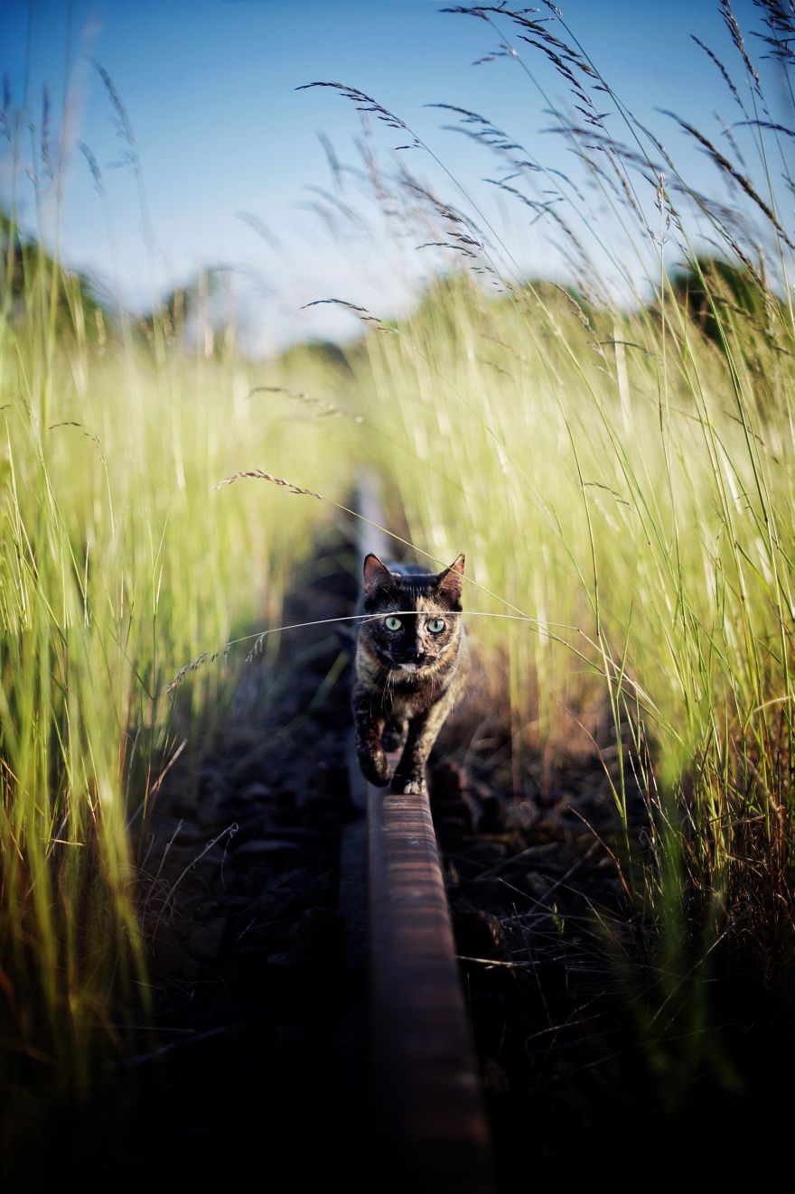 fotos-gato-estaciones (9)