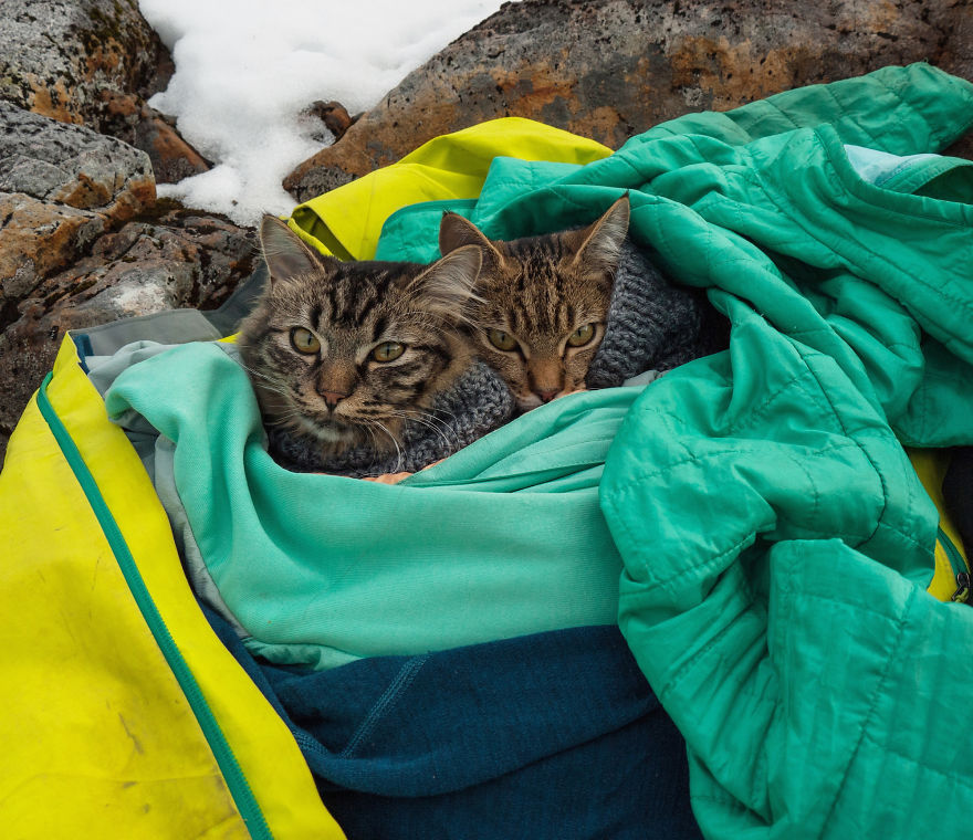 gatos-abandonados-aventureros-bolt-keel (12)