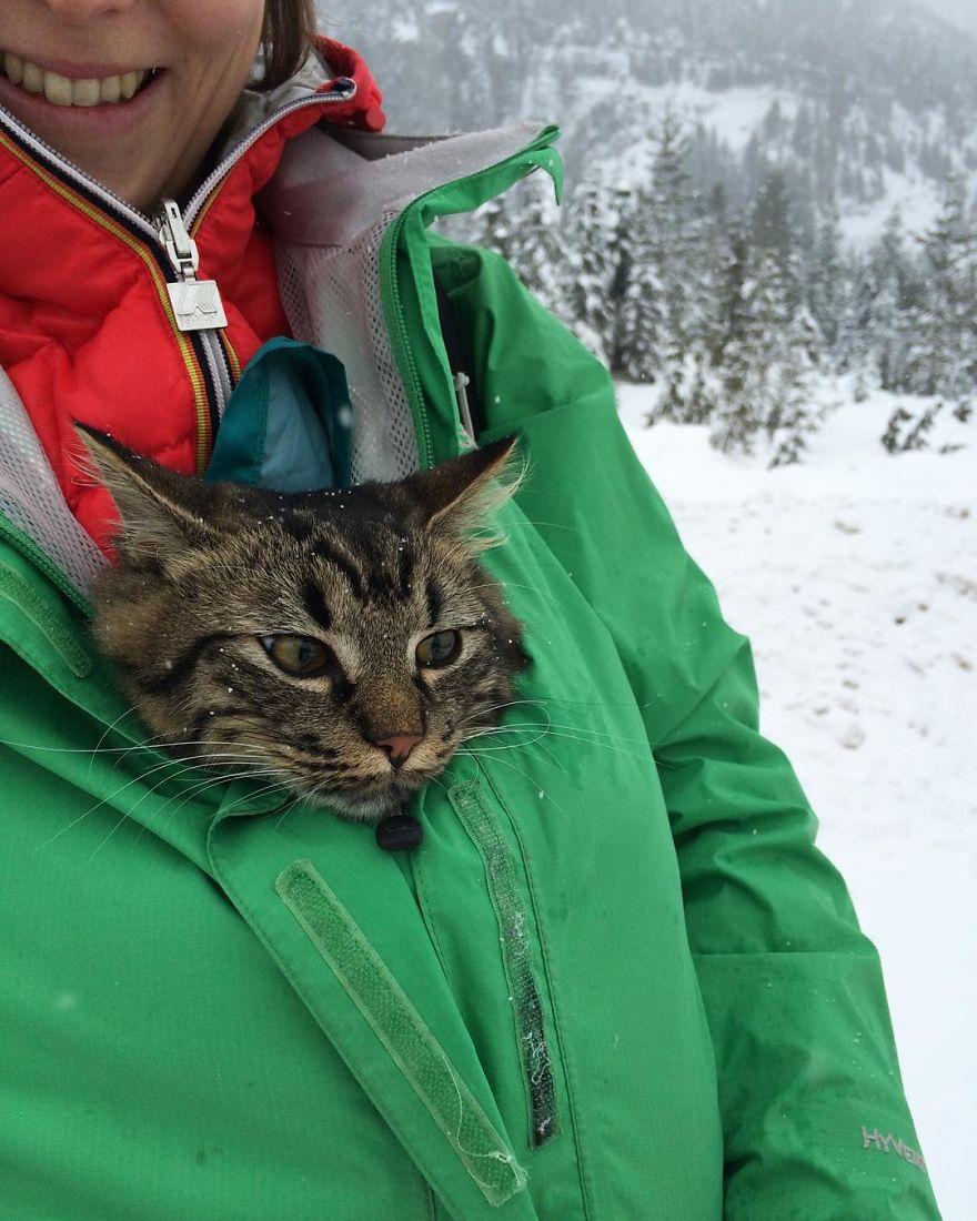 gatos-abandonados-aventureros-bolt-keel (3)