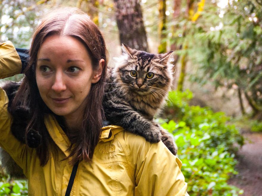 gatos-abandonados-aventureros-bolt-keel (9)