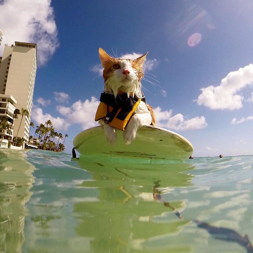 kuli-gato-tuerto-surfero-hawai (4)