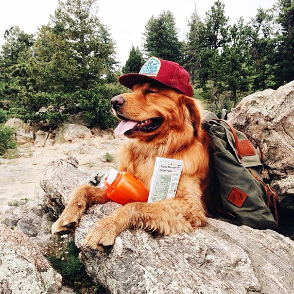 perro-aspen-viajes-aventura-hunter-lawrence (4)