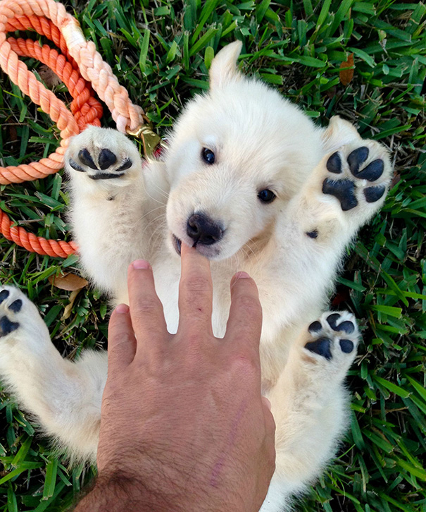 perros-regordetes-oseznos-parecidos-2 (11)