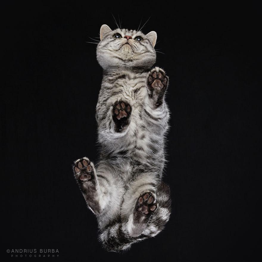 under-cats-fotos-gatos-debajo-andrius-burba (13)