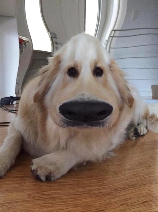 filtro-snapchat-perro-dug-pelicula-up (5)