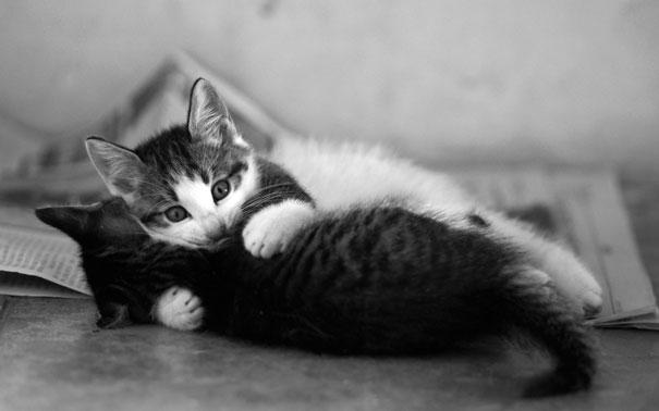 parejas-gatos-san-valentin (23)