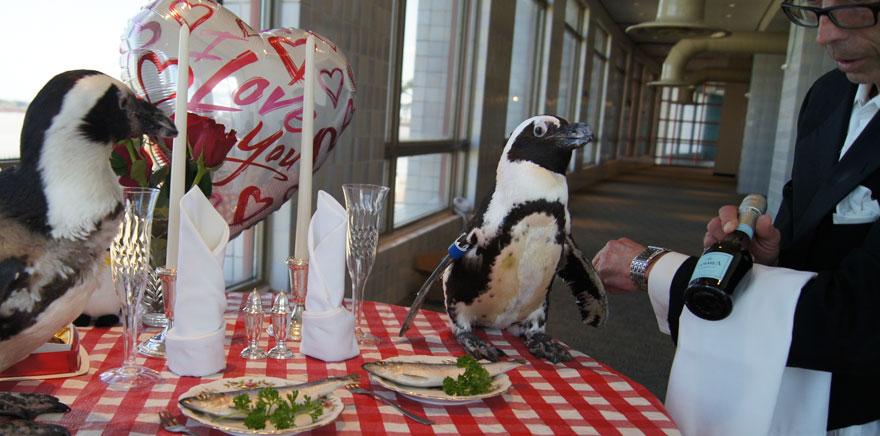 pinguinos-pareja-22-san-valentin-cena-audubon-aquarium (3)