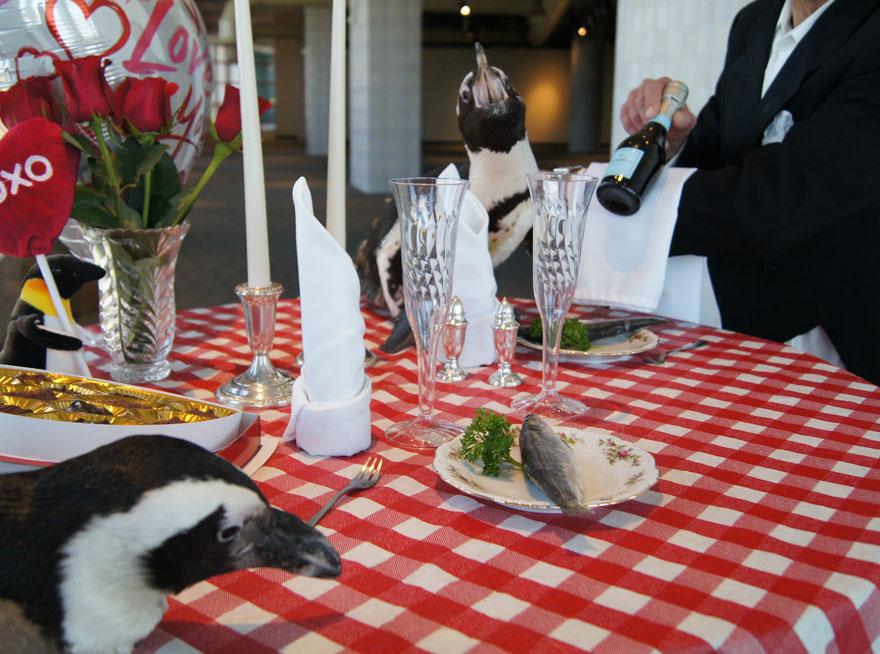 pinguinos-pareja-22-san-valentin-cena-audubon-aquarium (4)