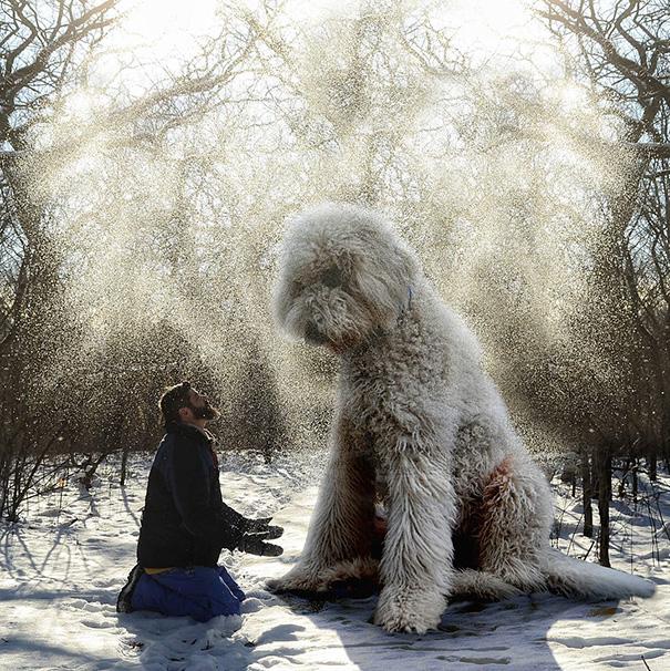 aventuras-juji-perro-gigante-photoshop-christopher-cline (1)