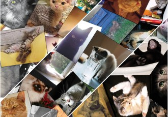 CAT COLLAGE-FRONT-SN