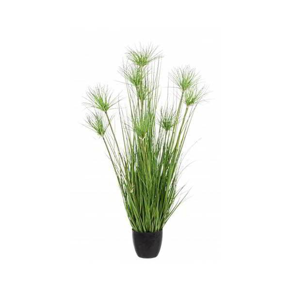 planta-desierto-verde-borgia-conti