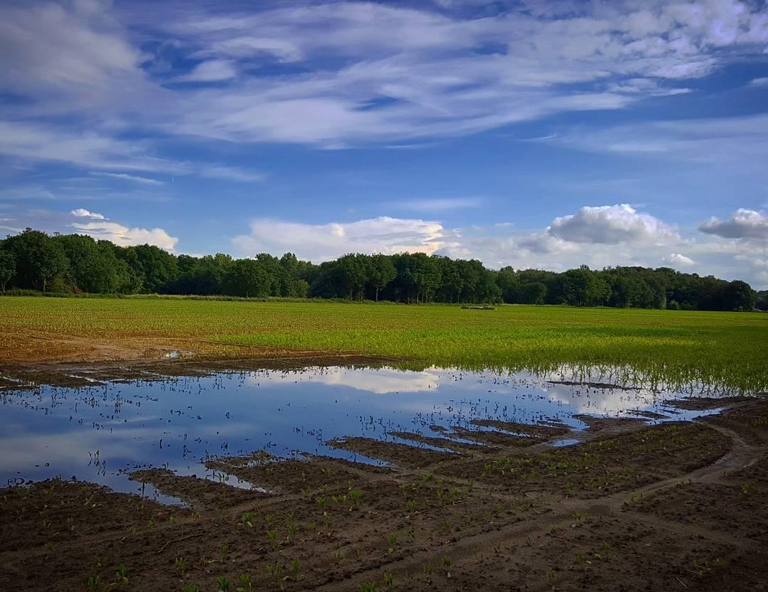 Zomaar een zonnige avond in het zuiden van Nederland.... #limburg #born #sittard #sittardgeleen #borninbeeld