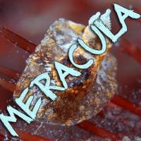 New Band Notice: Meracula Featuring Members of FORT!