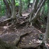 Daibutsu Trail