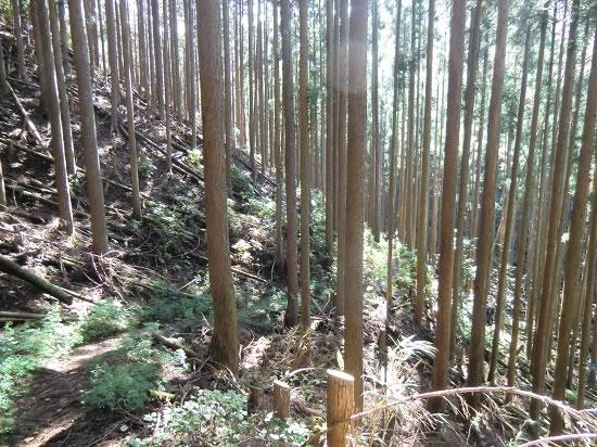高見山登山07