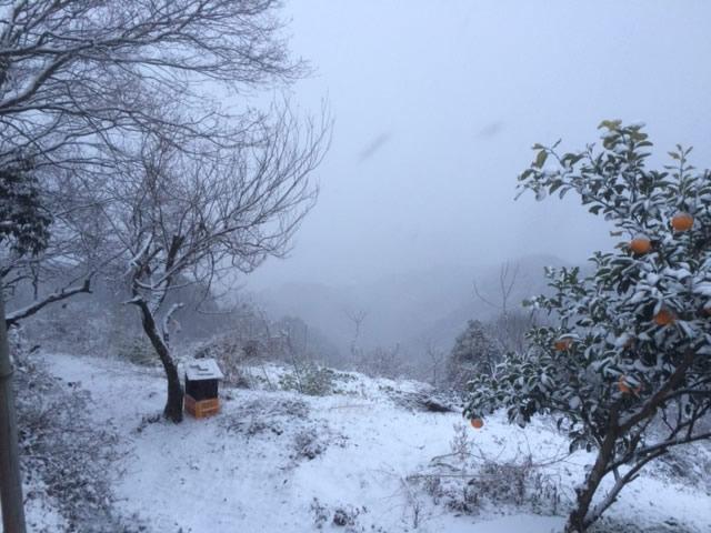 和歌山猟場の雪
