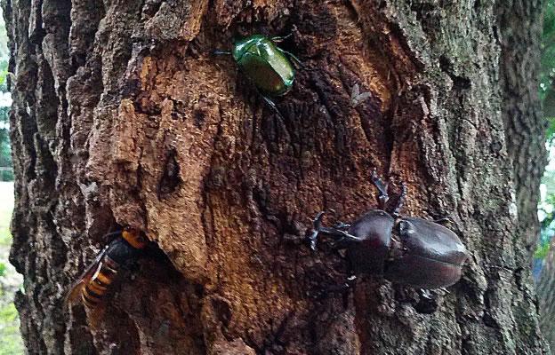 かぶと虫たち
