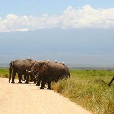 動物浪漫。古今東西のでかい動物が登場するサイト「巨大動物図鑑」