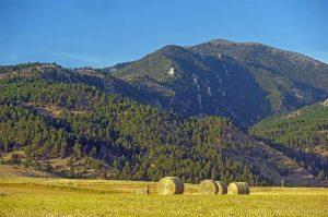Homestead Bozeman Montana 1