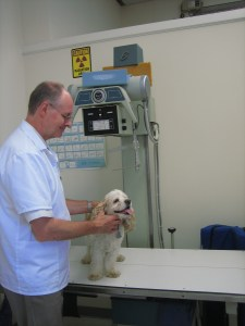 Dr. Peter Lugten holds a pet dog in the treatment room under the Radiology equipment.