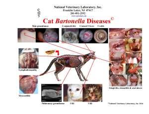 4 Cat Poster- Hospital Web Site JPEG