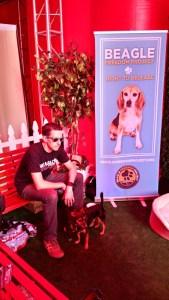 [image: beagles!]