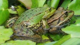 frogs-259647_1280