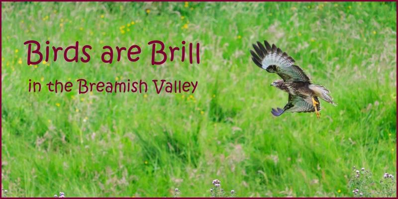birds are brill 2016