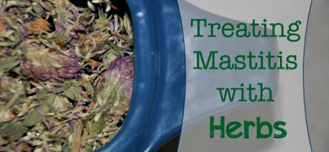 Treating Mastitis with Herbs