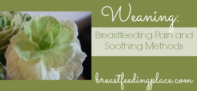 weaning cabbage