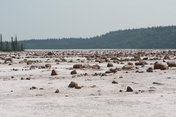 Von dort führte ein Ausflug in den Wood Buffalo National Parc mit seinen Salzebenen...