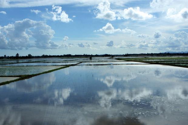 Schier endlos wirkten die Reisfelder.