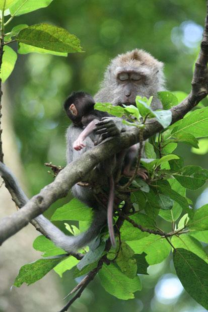 Einfach süß - Diese schlafende Mutter mit ihrem Jungtier.