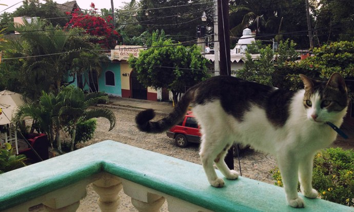 Luna on the balcony in San Pancho, Mexico