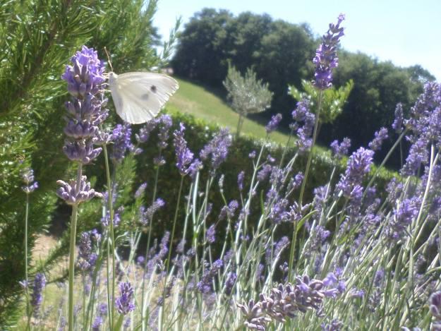 Il Lavandeto di Assisi garden