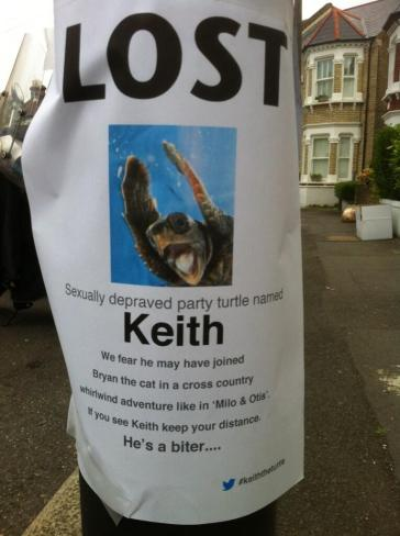 STILL MISSING: Keith the party turtle