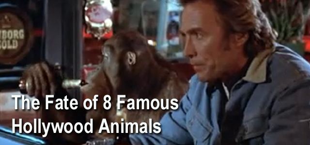 Famous Hollywood Animals