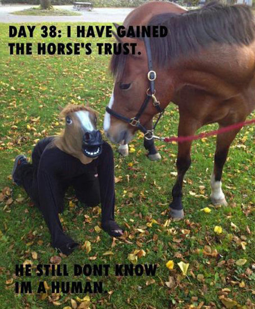 I have gained the horse's trust