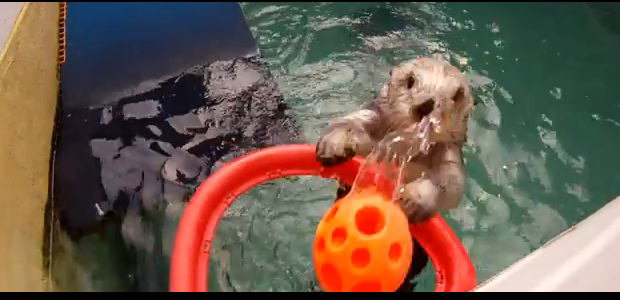 Sea Otter Dunk