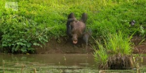 This monkey's having more fun than you (GIFs)