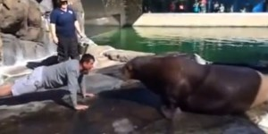 Jim Harbaugh Took on A Walrus in a Push-Up Contest, Because Jim Harbaugh Is a Man Who Backs Down From Nothing